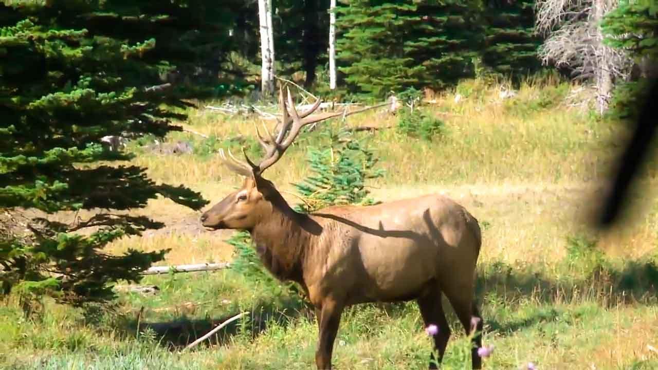 Elk Hunting Crossbow Kill Outdoor Secrets with Babe Winkelman