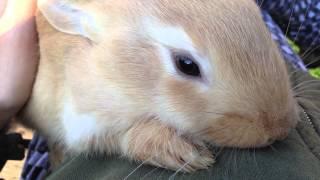 ♥ Прикольный Маленький Кролик Из Семейства Великанов