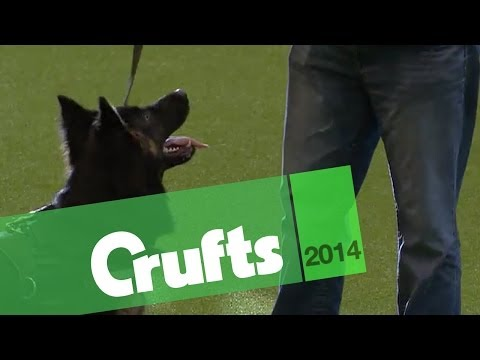 West Midlands Police Display | Crufts 2014