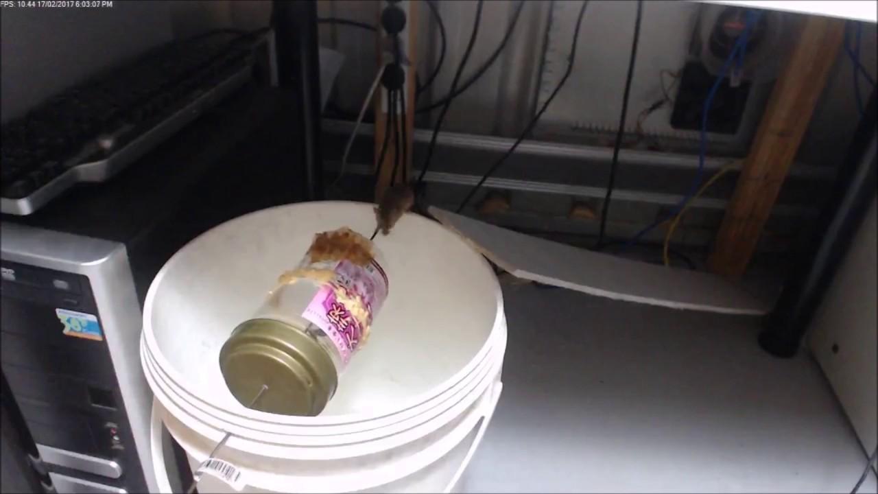 網路上學來的DIY抓老鼠方法 省了不少錢買老鼠籠 - YouTube