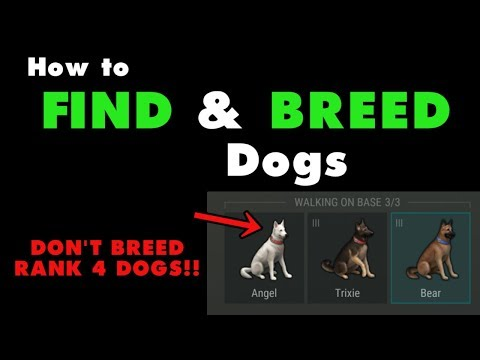 How to Find and Breed Dogs in Last Day on Earth Survival. LDOE puppy food