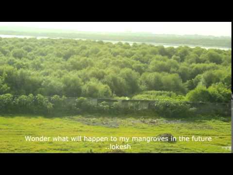 Mangroves of Mumbai