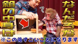 お猿さんの方がより素直なリアクションで面白い…!!! 【ハンドスピナ...