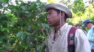 Biodiversity on Mexico Coffee Farms