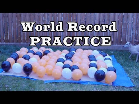 Dog popping 100 balloons for World Record - PRACTICE
