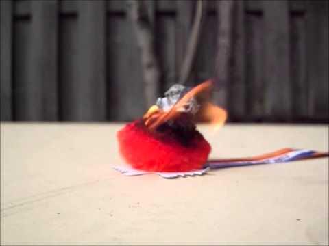 Royal Wuppie Burning