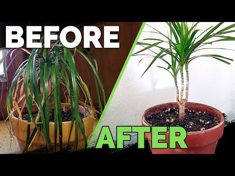 houseplant-care:-bring-your-houseplant-back-to-life!