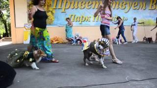 Региональная выставка собак г. Волгодонск Ростовской области, 10.08.2013г.