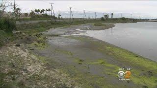 Study: Quake Could Sink Seal Beach Wetlands