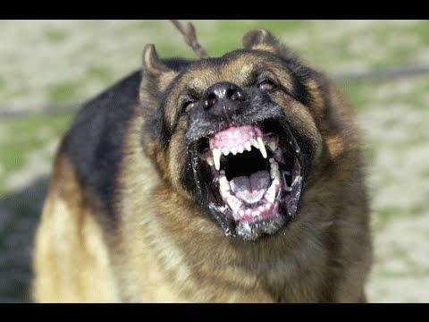 sajan dog training academy [dog training in kerala ]kottayam,pala .call 09946515222