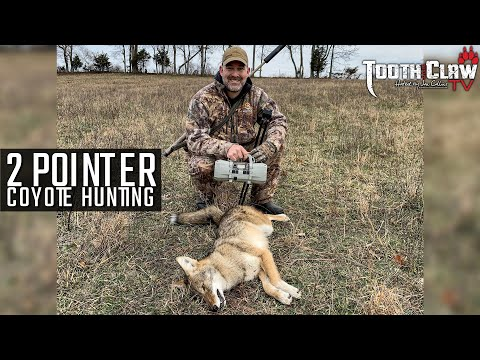 2 Pointer - Coyote Hunting