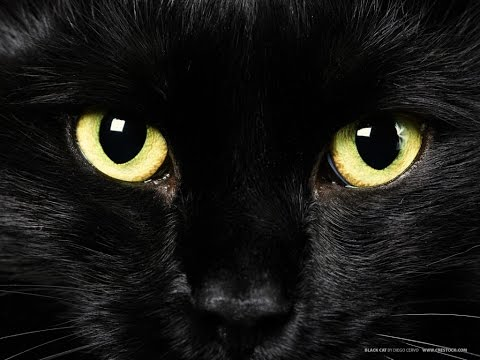 The Occult Meaning Of The Black Cat