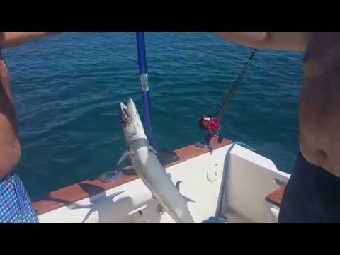 Miami Weekends - Hammerhead sharks, Fishing, Sandbar