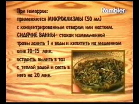 Зверобой продырявленный (зверобой трава) - свойства