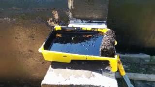 видео Гидроизоляция фундамента битумной мастикой