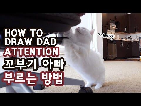고양이 꼬부기가 아빠 부르는 방법 CAT HOW TO DRAW OWNER S ATTENTION