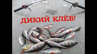 РЫБАЛКА НА ОКУНЯ ПО ПОСЛЕДНЕМУ ЛЬДУ НЕ ЗРЯ ПРИШЛИ НА МЕЛКОВОДЬЕ PERCH FISHING
