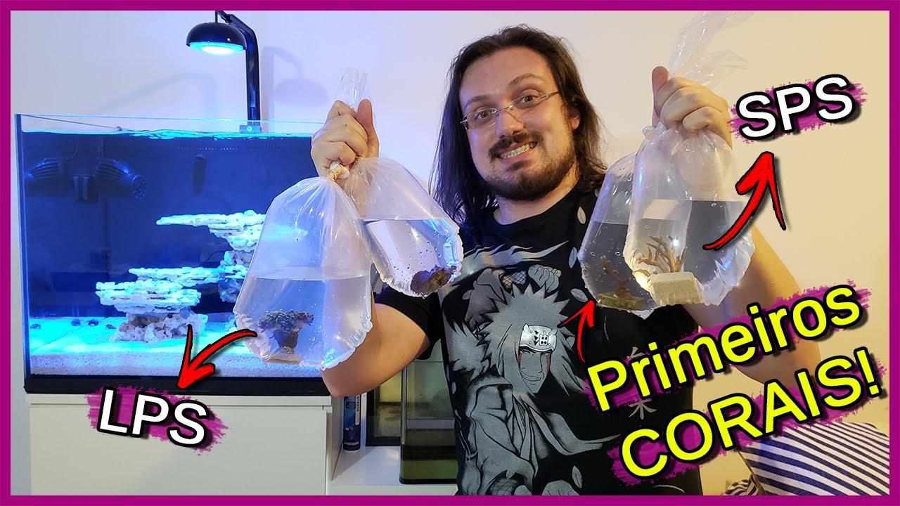 Coloquei os Primeiros CORAIS no meu Aquário Marinho! (SPS e LPS)