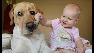Funny Babies Laughing Hysterically at Dogs Compilation thumbnail
