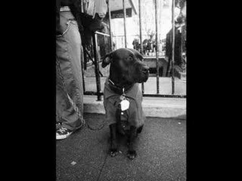 Veterinary Street Outreach Service