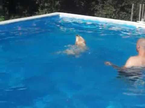 Piscina per cani vacanze con cane agriturismo tana dei lupi youtube - Piscina per cani ...