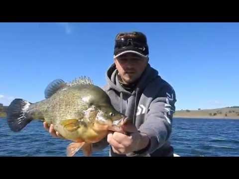 Yellowbelly fishing Windamere dam, August 2016