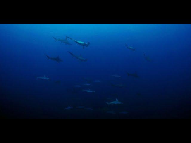 与那国島の海(shark-watching)