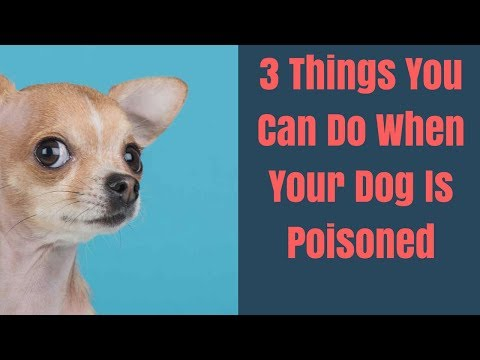 3 Things You Can Do When Your Dog Is Poisoned