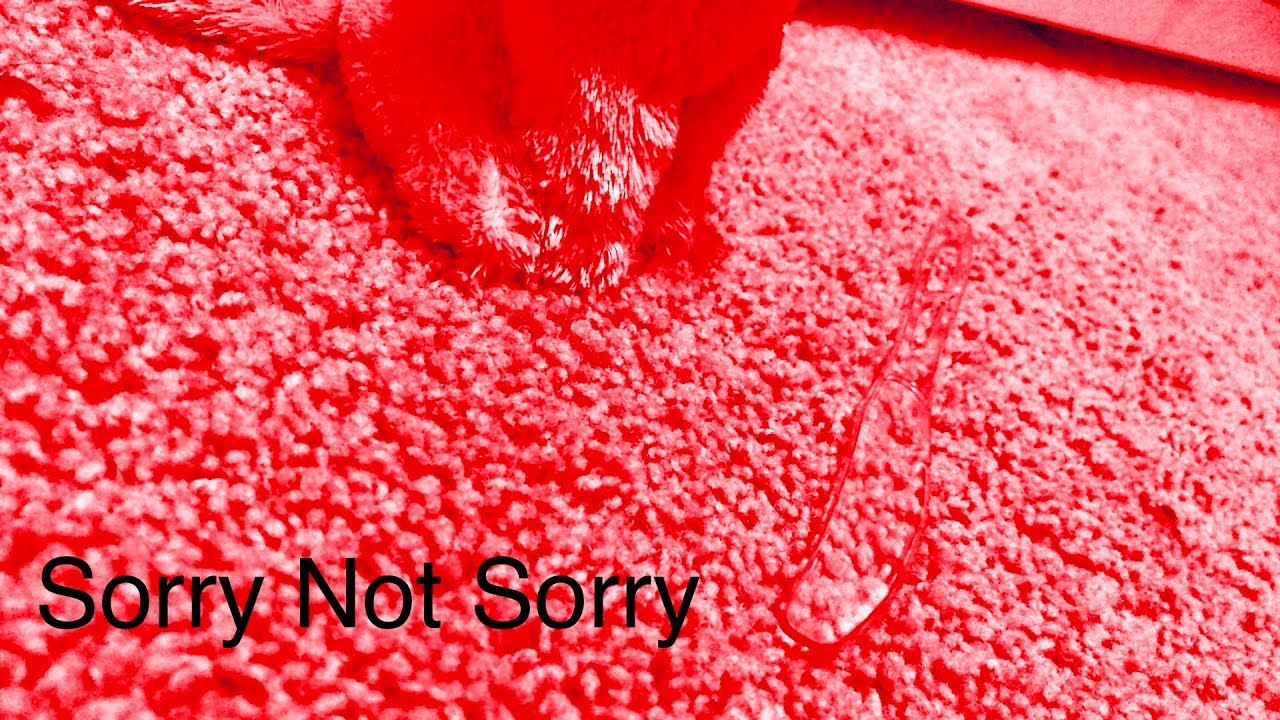 b180aab085e Sorry Not Sorry Beanie Boo Mv - YouTube