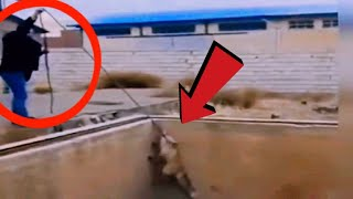 Clever fox gets hold of a rope to get out of the basement!!!