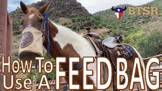 How To Use A Feedbag -BTSR Horseback Trek- Cavalcade