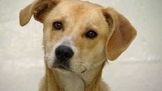 Christchurch Spca Turning Away Dogs
