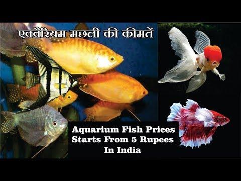 Aquarium fish prices in India with Name's  2018