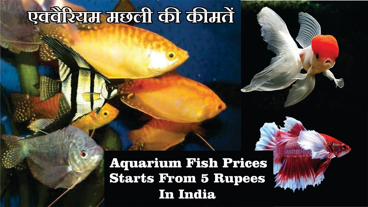 Aquarium Fish Prices In India With Name S 2018 Youtube