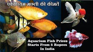 Aquarium fish prices in India with Name