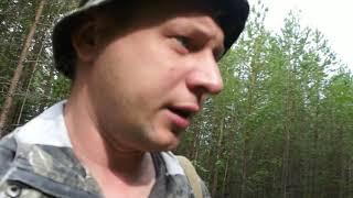 Прогулка по лесу. В поиске грибов.