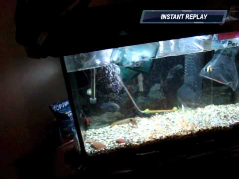 how to move aquarium fish interstate