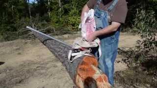 Seeding Red Clover
