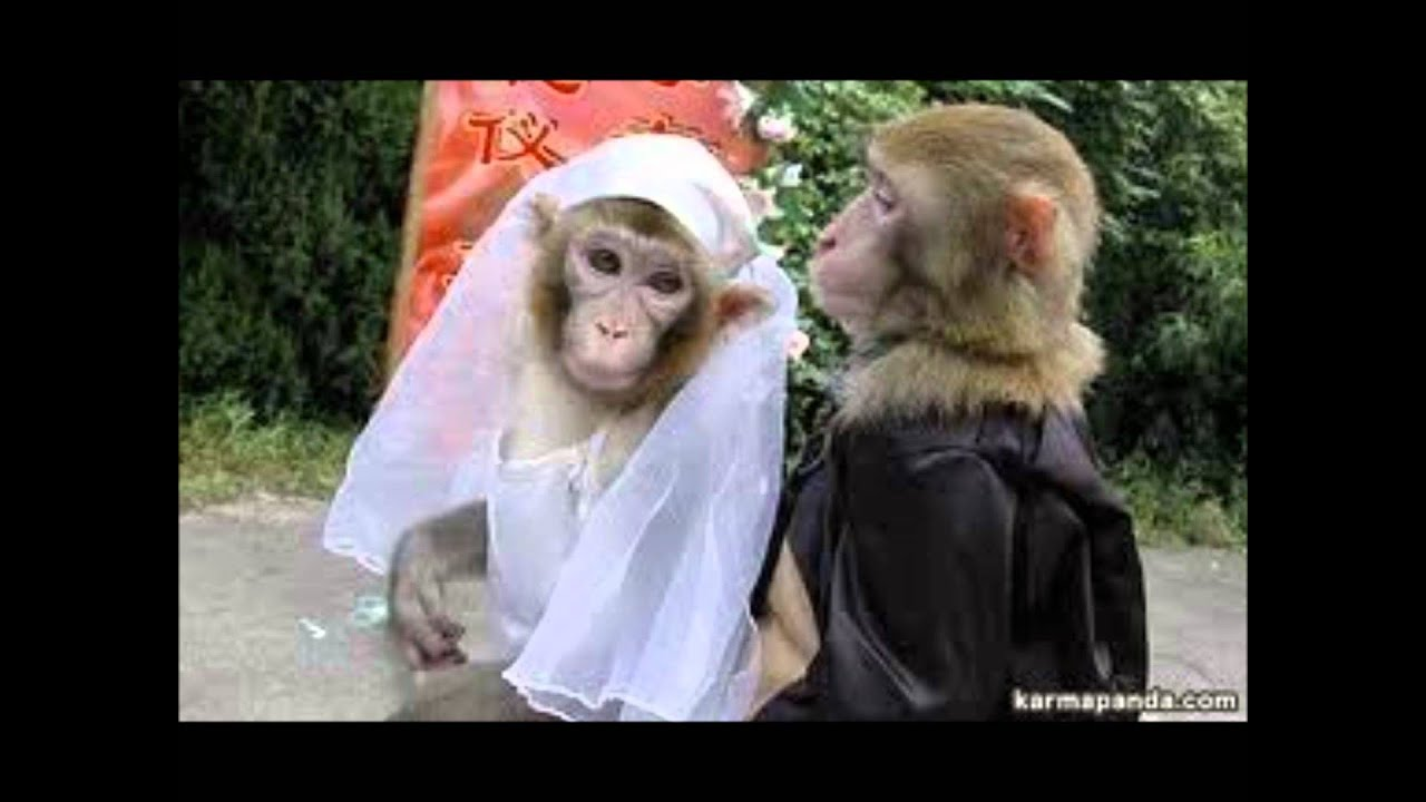 Los Monos Más Graciosos Del Mundo Tinkiwinki Youtube