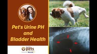 Pet's Urine PH and Bladder Health