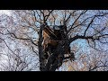 Protesting Coal Mining From a Treehouse   The Daily 360