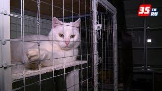 Служба отлова бездомных животных начала работать в Череповце