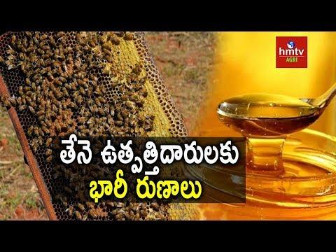 Honey Making   Loan Scheme for Beehives   hmtv Agri