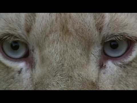 Stress, Portrait of a Killer - Full Documentary (2008)