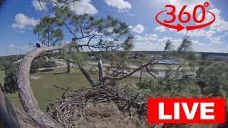 Southwest Florida Eagle Cam - 360 thumbnail