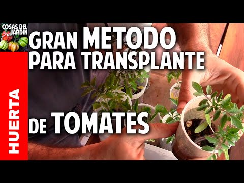 A que no conocias este método para transplantar los  tomates cherry @cosasdeljardin