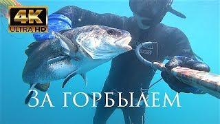 Подводная охота. За горбылем. Черное море.  Видео сезон 2017