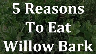5 reasons to eat willow bark