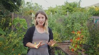 Early July - Transitioning Your Garden for Year Round Harvest - Victoria, BC