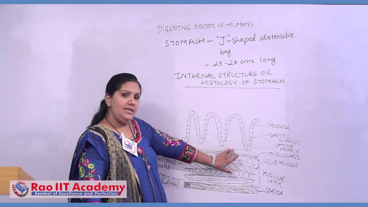Digestive System of Humans Part 1 - NEET AIPMT AIIMS Zoology Video ...